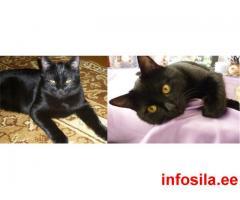 3.05 Пропал домашний,черный кот!
