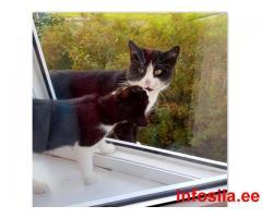 Пропал черно-белый кот